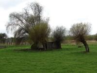 vrby hlavaté na pastvinách za vsí
