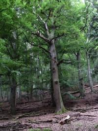 Vela - zbytek původního horského lesa ...