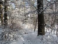 PULČINY - vrcholové temeno Hradiska