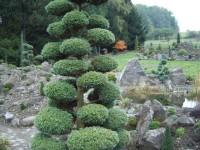 Okrasné zahradnictví a miniarboretum ve Staříči