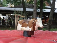 jízda na elektrickém býkovi
