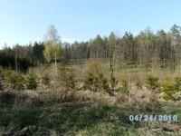 les v okolí Útěchova