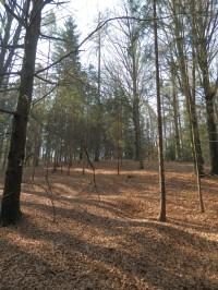 Les u zastávky č. 2