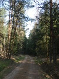Cesta k Darebnickému rybníku