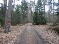 Lesní cesta, po které naučná stezka vede