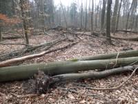 Pohled do lesa na mrtvé dřevo