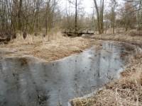 Rameno u Stříbrného rybníka