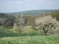 Pohled na Kulatý vrch (481 m n.m.) s přírodní rezervací Kamenná hůra