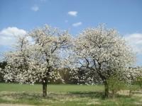 Jaro je tady