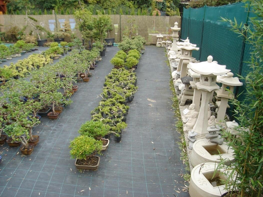 fotogalerie bonsai centrum v lib anech. Black Bedroom Furniture Sets. Home Design Ideas