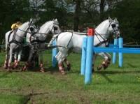 Světový pohár v závodech koňských spřežení 2013 v Polici nad Metují