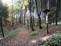 V lese u tabule č. 4