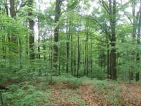 Vysoké Chvojno – přírodní rezervace U Parku