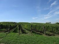 Tour de burčák po vinařských stezkách Znojemska