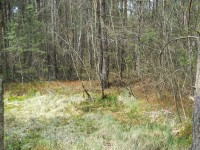 Borkovická blata - po ruční těžbě
