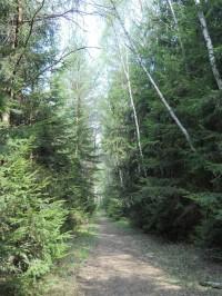 Borkovická blata - vstupní trasa