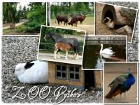 ZOO Vyškov s domácími zvířaty