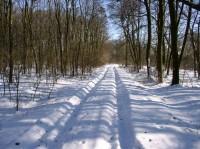 cesta lužním lesem