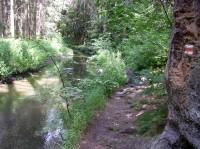 Konopišťský potok nad osadou Měsíční údolí - léto