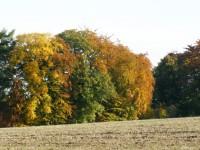 barevný podzim z cesty přes louku ke kamenným řadám