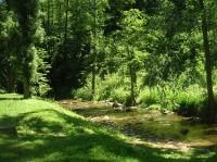 milá cesta lesem