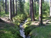 Tetřívčí potok