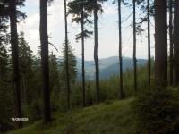 Výhled z lesa
