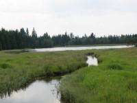 rybník Myslivna