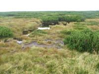 Úpské rašeliniště