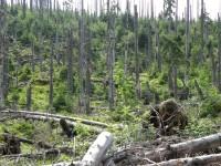 Na Ztraceném - v péči ekologických hnutí