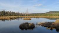 Prohlídka přírodní památky šumavských slatí - rašelinišť