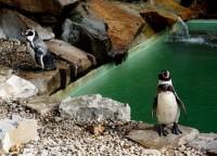 Panáčci ve fraku, tučňáci zlínské ZOO - Lešná