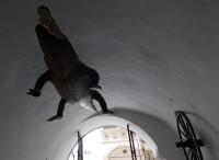 Za Brněnským drakem do Staré radnice