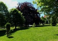 Buk lesní - památný strom v Andělské Hoře