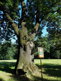Památný strom v zámeckém parku B. Němcové ve městě Karviná