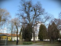 Jarní procházka Tlumačovem