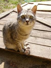 Vykulená kočka Cipka z kozí farmy Nová Víska