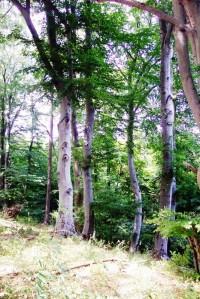 Suťový les