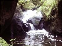 Křinice - potok v Kyjovském údolí