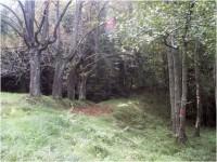 Zadní Jetřichovice - bývalá obec