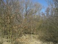 Pohled na lužní les pod hrází rybníku Skalský