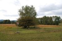 Pastviny u Záhorčic