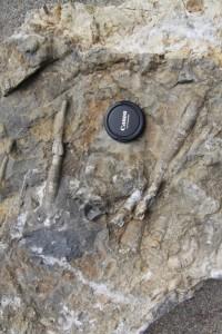 Ukázka hornin v geoparku