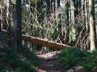 Lesní polomy cestou na Bobek