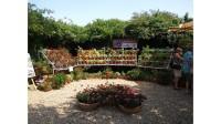 výstava pelargonií