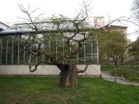 Botanická zahrada venkovní expozice