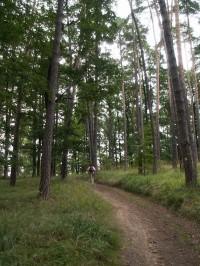 Cesta borovým lesem nad Ořešínem