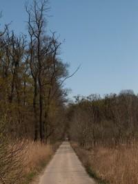 Cesta podél Moravy