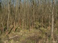Lužní les