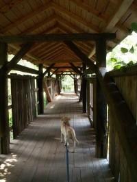 Dřevěný mostek u Prudké